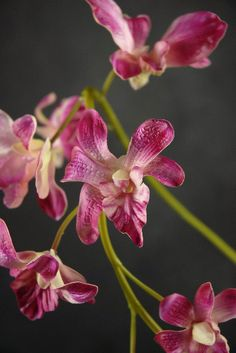 Natural Touch Flowers Dendrobium Orchid Beauty Red 7 flowers $12.99 each / 3 for $11 each