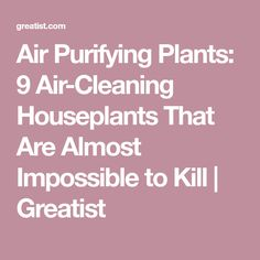 Air Purifying Plants: 9 Air-Cleaning Houseplants That Are Almost Impossible to Kill   Greatist