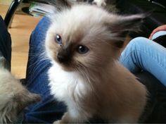 Lovely-KittyCats: 画像