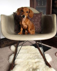 50 best dogs and iconic chairs images chairs doggies dogs rh pinterest com