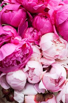 Pink Peonies in the Rain by Paris in Four Months