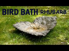 How-to? Tutuorial. Concrete bird bath from rhubarb leaf mold.Moulding / Casting Concrete Bird Bath with Rhubarb Leaves