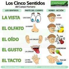 Spanish vocabulary - Los cinco sentidos / The five senses