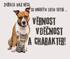 Motto, Proverbs, True Stories, Animals And Pets, Pitbulls, Motivational Quotes, Wisdom, Humor, Sayings
