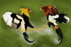 peleas-de-gallos-350px.jpg (350×232)