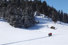 Visitors cross-country ski around Cerro La Jara, a forested lava dome within the caldera of Valles Caldera National Preserve.