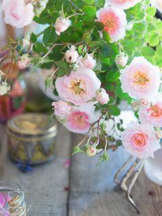 Roses:)