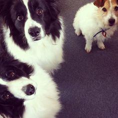 All three of my lovelies!