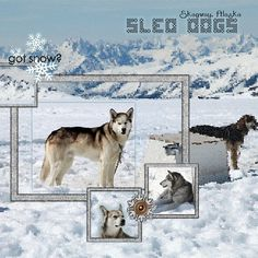 #Disney #Scrapbook Page Layout -Alaskan Cruise Sled Dogs Sagway Alaska using template by @pixels2pages