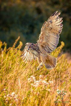 Beginnerstips om roofvogels te fotograferen - de wereld van roofvogelfotografie