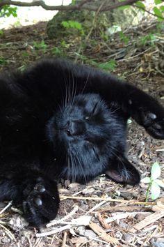 Happy black cat & Best. Story. Ever. http://www.pinterest.com/pin/87468417736906374/