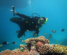 My best travel photos part 43: Another awesome shot of my man Håkan diving in great barrier reef QLD. Extraordinary beauty. March 2014. #greatbarrierreef #scubadiving #diving #australia #reef #travel #qld #awesomeness #amazingnature #beautifulnature by nordlanderelin http://ift.tt/1UokkV2