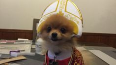 Holy Pomeranian wants to bless you with its Halloween costume