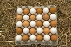 Learn about collecting, cleaning, and storing chicken eggs in this Raising Chicken's 101 beginner series from The Old Farmer's Almanac.