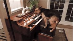 Would pay good money to see Sadie in action at a concert. | This Dog Is A Musical Genius That Can Play The Piano Better Than You Can