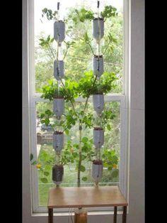 Plantar en botellas de plastico