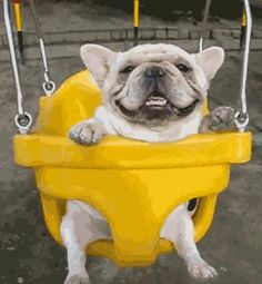 Youtube,french bulldog swinging. If you dont cry afterward you're a sh%*head.