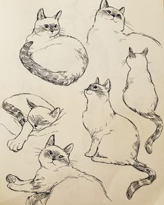 bev johnson — I missed drawing this little marshmallow Animal Sketches, Art Drawings Sketches, Animal Drawings, Cute Drawings, Cat Drawing Tutorial, Cat Sketch, Art Reference Poses, Face Art, Art Tutorials