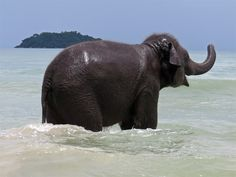 Baby elephant facing out to sea. From iamkohchang.com