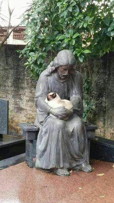 St.Alban's Episcopal Church PE Veja este link >> http://www.universodegatos.com/gato-siames/ ~ O Gato Siames é uma raça natural, a sua coloração é o resultado de uma mutação genética. Ele tem contribuído para muitas outras raças... descubra agora.