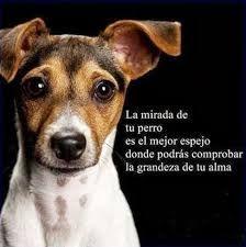 Resultado de imagen para frases inteligentes sobre perros