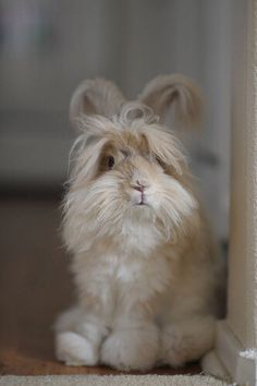 Big Bunny's sister, Blonde Bunny. Just as angry and grouchy as Big Bunny, only fluffier.  ~~  Houston Foodlovers Book Club