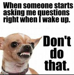 Funny Animal Quotes, Funny Animals, Funny Quotes, Animal Sayings, Ask Me Questions, This Or That Questions, That Moment When, My Dear Friend, Wake Me Up