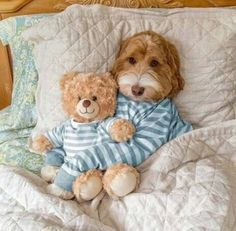 Australian Labradoodle with teddy Cute Dogs And Puppies, I Love Dogs, Pet Dogs, Dog Cat, Doggies, Animals And Pets, Baby Animals, Funny Animals, Cute Animals