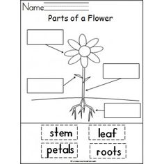 Spring projects classroom fun on pinterest spring for Parts of a plant coloring page