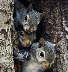 Fall in the Squirrels' World