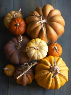 Shop pumpkin from Williams Sonoma. Our expertly crafted collections offer a wide of range of cooking tools and kitchen appliances, including a variety of pumpkin. Still Life Photos, Happy Fall Y'all, Fall Harvest, Harvest Moon, Harvest Time, Fall Pumpkins, Mini Pumpkins, Autumn Inspiration, Color Inspiration