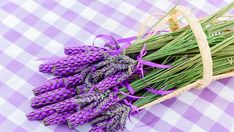 Natural Herbs, Home Remedies, Health And Wellness, Herbalism, Tea Time, Essential Oils, Recipes, Herbal Medicine, Health Fitness