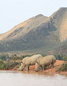 Aquila Private Game Reserve Day Trip Safari. R1695