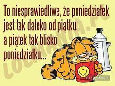 Weekend Humor, Fun Learning, Motto, Good Morning, Quotations, Haha, Life Hacks, Funny Quotes, Jokes