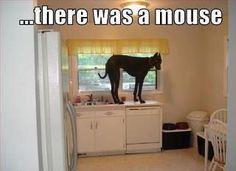 Scaredy dog :-)