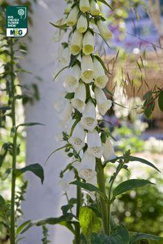 RHS Chelsea Flower Show - Fresh Garden - London Square London Square Jo Thompson