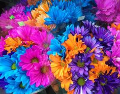 Colorful flowers.