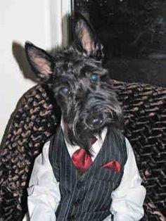 Scottish Terriers do look like little old men:-)