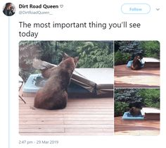 15 Wholesome Memes To Start The Week Off Right - World's largest collection of cat memes and other animals Funny Animal Memes, Cute Funny Animals, Cat Memes, Funny Cute, The Funny, Funny Memes, Hilarious, Satire, Cute Animal Pictures