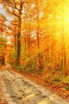 Pretty fall scenery.