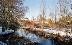 Cotswold stream in the snow, Gloucestershire. Copyright Michelle Jones