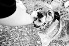don't buy. take from shelter. #dog #shelterdog #happydog #member