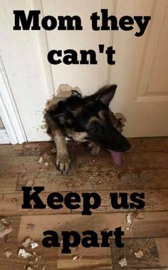 I'VE BEEN HERE. except he pissed on the door after breaking it...