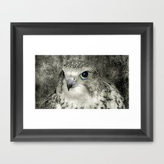 Kestrel close-up in B Framed Art Print by F Photography and Digital Art - $35.00