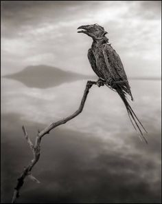 Tanzania's Lake Natron calcifies the animals that die in its waters, and Nick Brandt captures them with eerie photographs.