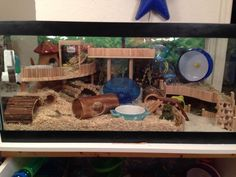 Proud of your hamsters cage - Page 624 - Supplies & Accessories - Hamster Hideout Forum - Page 624 Hamster Tank, Dwarf Hamster Cages, Hamster Diy Cage, Gerbil Cages, Hamster Habitat, Hamster Life, Syrian Hamster, Pet Cage, Chinchillas