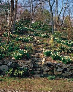 David Culp and Michael Alderfer have spent 20 years building, planting, and refining this garden 30 miles west of Philadelphia so that it offers colorful vistas year-round.Here, spring awakens the hillside with red Helleborus 'Brandywine' and Narcissus 'Ice Follies.'