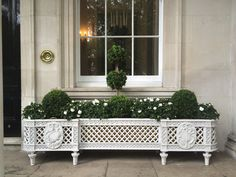 An elegant Louis XVI–style planter—one of a pair that flanks the front door of Dudley House, a historic Park Lane mansion belonging to a Qatari sheikh and restored by the late Alberto Pinto—hosts boxwood topiary and white Begonia tuberosa.