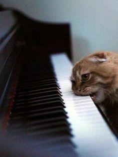 FFFFOUND! / liebe / katze (cat,photography)     #crazy #cat