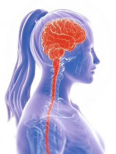 What is the Neuromatrix of Pain?